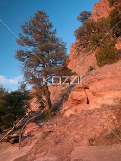 trees on cliff. - Image of trees on cliff.