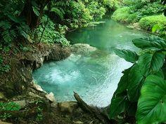 acai-lagoon:  kai-tropic:  tropicalblxck:  t-iger-child:  ☾• ☮ ˚✿*☯ ☾• ☮ ˚✿*☯  following back jungle/tropical blogs  ❀CHECK OUTMY BLOG.DO IT.❀    tropical paradise here ACAI-LAGOON