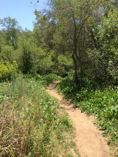 Singletrack along Penasquitos Creek. Nature Aesthetic, Mountain Bike Trails, Wild Nature, Travel And Leisure, Pathways, Beautiful Landscapes, Countryside, Traditional Landscape, Side Yards
