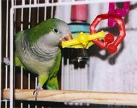 Providing a variety of toys will help your pet bird face the challenge of boredom