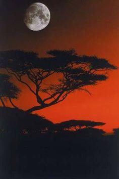 Mara, Kenya, Akazie, Grasfläche