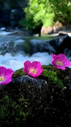 Nature Photography Flowers, Sunset Photography, Beautiful Rose Flowers, Beautiful Flower Arrangements, Beautiful Photos Of Nature, Beautiful Gif, Good Morning Animation, Best Flower Pictures, Wallpaper Nature Flowers