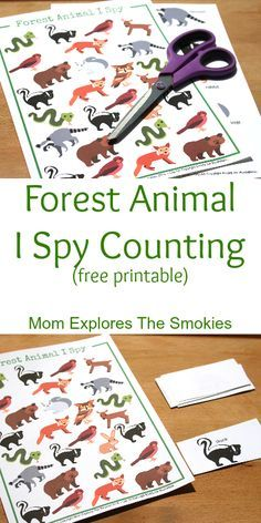Forest Animal I Spy Counting, Mom Explores The Smokies Woodland Animals Theme, Forest Animals, Woodland Creatures, Animal Activities For Kids, Preschool Activities, Indoor Activities, Summer Activities, Theme Forest, Woodland Forest