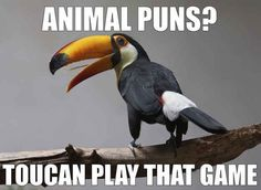 Ahhh these are hilarious... click through for more!  Funny animal memes and puns -- have a laugh and join the blog party / link-up!  We've got hilarious toucans, cats, dogs, cows, and shellfish... oh  and Walking Dead -- via Devastate Boredom