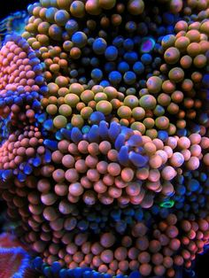 coral macro – takes my breath away… -