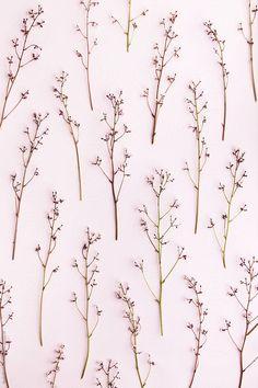 Flower stalk background by Ruth Black for Stocksy United Flower Background Wallpaper, Cute Wallpaper Backgrounds, Tumblr Wallpaper, Flower Backgrounds, Photo Backgrounds, Screen Wallpaper, Cute Wallpapers, Iphone Wallpaper, Apple Watch Wallpaper