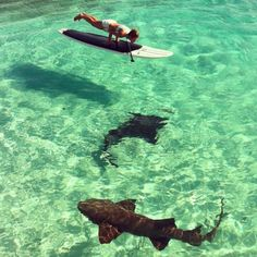 Tasha McWilliams paddle board yoga with sharks in Highbourne Cay, Bahamas. Based out of West Palm Beach, FL