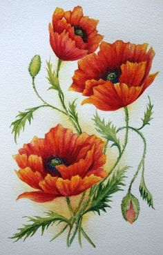 Thinking about getting poppies and the California state outline for my next tattoo- just need to figure out placement Art Floral, Botanical Illustration, Botanical Prints, Flower Prints, Flower Art, Poppy Flower Painting, Poppies Painting, Watercolor Flowers, Watercolor Paintings