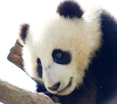 San Diego Zoo March 2013 by LeeLee 3680, via Flickr