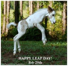 Stardust, a miniature horse foal Most Beautiful Animals, Beautiful Horses, Beautiful Babies, Happy Leap Day, Baby Animals, Cute Animals, Animal Babies, Funny Animals, Baby Horses