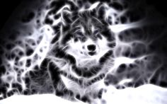lightanimals | Cool Animal Wallpaper Light Wolf Wallpapers For gt Cool Animal
