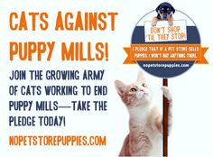 Cats Against Puppy (and Kitten) Mills