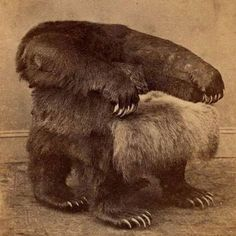 "A fabulously creepy vintage taxidermy ""bear"" armchair."