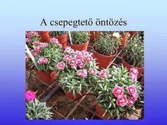 Testvériskolai Projekt Iregszemcse - Győr: A Víz Világnapja Plants, Plant, Planets