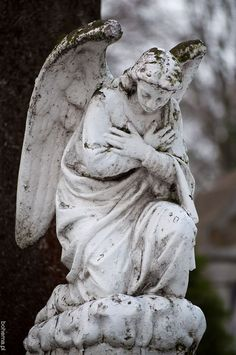 ☫ Angelic ☫ winged cemetery angels and zen statuary - Cemetery Angels, Cemetery Statues, Cemetery Art, Statue Ange, Entertaining Angels, I Believe In Angels, Ange Demon, Angels Among Us, Angels In Heaven
