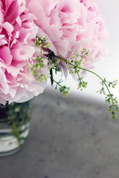 pink peonies + spring