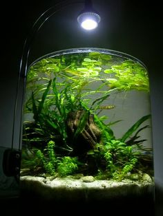 shrimp jar aquarium - Google Search