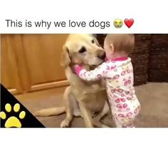 Dogs are So Loyal That's Why I Love Dogs - Cutest Baby Animals Cute Funny Animals, Cute Baby Animals, Funny Dogs, Animals And Pets, Smart Animals, Dog Quotes Funny, Dog Memes, Fun Funny, Cute Puppies