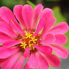 Flower photography; macro