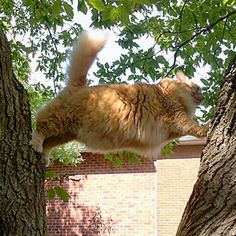 Cat gets time to ponder how not to climb a tree