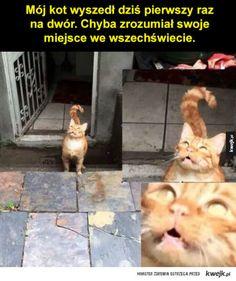 #kwejk #humor kot