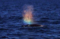 Dolphins Rainbow