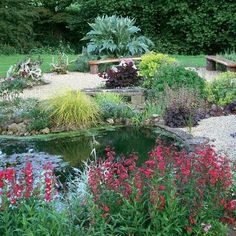 small pond surrounded by flowering plants
