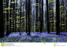Tree Wallpaper, Photo Wallpaper, Dark Tree, Shade Canopy, Beautiful Fairies, Tree Silhouette, Dark Forest, Home Photo, Photo Illustration