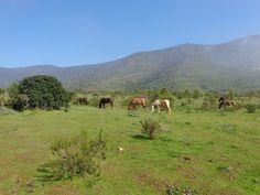 caballos pastando en el cerro