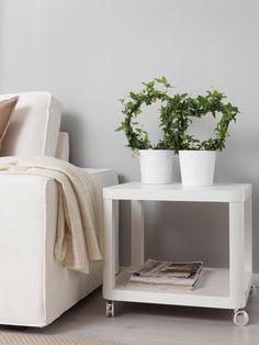 Plantas de interior resistentes hiedra