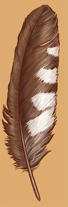 A primary from a Saw-whet Owl for a tattoo design for a friend. It started out simple and graphic, but she insisted she could get white ink and that I s. Feather Painting, Feather Art, Bird Feathers, Trendy Tattoos, Cool Tattoos, Owl Feather Tattoos, Raven And Wolf, Native American Artwork, Nail Tattoo