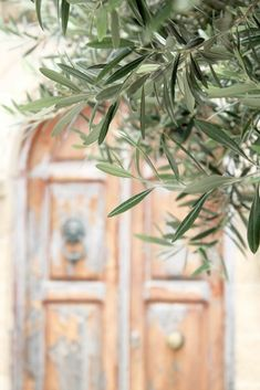 Olives, Tree Watercolor Painting, Leaf Photography, Minimal Photography, Under The Tuscan Sun, Olive Gardens, Olive Tree, Cute Wallpapers, Pretty Flowers