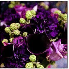 Plum purple chartruse