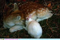 Bambi and Thumper  ONE word........TRUST.....comfort for a night..........priceless with its gift to eternity