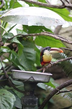 Love the aviaries at the San Diego Zoo! No cages for spectacular birdwatching and up-close photos.