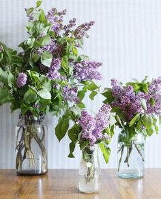 It won't be long until our lilacs are blooming! Can't wait to have a big bouquet in the kitchen!