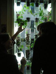 Horta na janela utilizando garrafas Pet