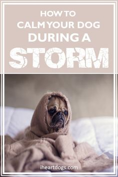 How To Calm Your Dog During A Storm