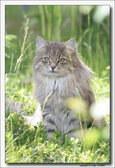 #amazing #CAT