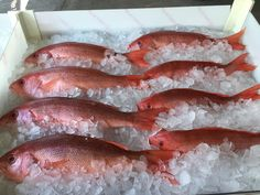 We have locally caught fish and seafood from some of St. Johns County's finest fishermen! www.rypeandreadi.com