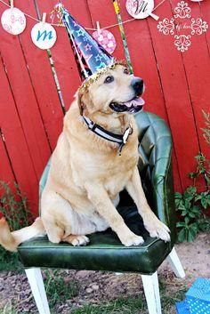 BIrthday Dog photo shoot