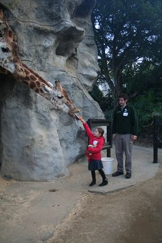 Taronga Zoo Roar & Snore >> 10 Weird Attractions in Sydney, Australia Hello Australia, Sydney Australia, Australia Trip, Australia Tourism, Australia Destinations, Places To Travel, Places To See, Visit Sydney, Land Of Oz