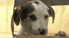 Awwwww...BBC News - Sochi Olympic dogs saved by Russian billionaire