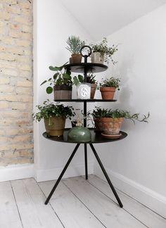 plant stand via @frokenoverspringshandling