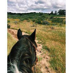 California National, State, Regional & Local Parks - CaliParks Local Parks, Park Photos, Park City, Regional, California, Horses, Animals, Instagram, Animaux