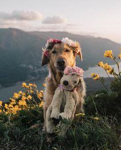 Golden Retriever Puppies So beautiful puppy. Cute Puppies, Cute Dogs, Dogs And Puppies, Doggies, Animals And Pets, Baby Animals, Animals Photos, Tier Fotos, Retriever Puppy