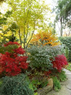 Consider Context A weeping hemlock, shown in the front left corner of this border, might get lost among other evergreens. Accenting it with red Japanese maples, however, allows it to shine while adding texture to the landscape.