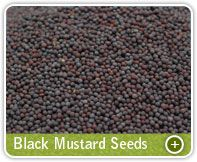 Organic Products India is renowned black mustard seeds exporter, yellow mustard seed supplier & manufacturer from India. High quality organic mustard seeds with bulk in container or custom packaging options.