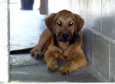 PLEASE don't let this poor baby spend the rest of it's life in a shelter :( To rescue or adopt email friendsofwcac@gmail.com... ASAP