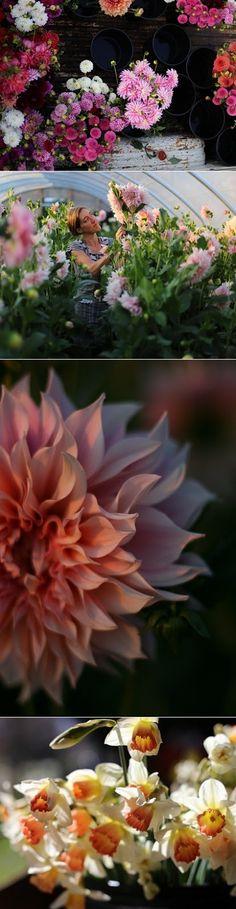 Organic flower farm in Skagit Valley